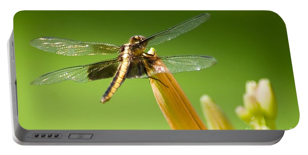 Insect Portable Battery Charger featuring the photograph Dragonfly by Ralf Broskvar