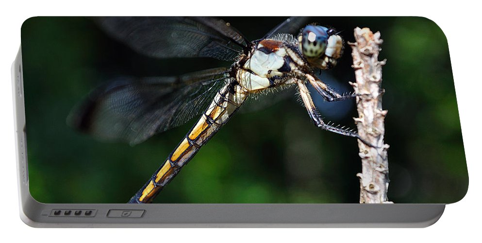 Animal Portable Battery Charger featuring the photograph Dragonfly Revisited by Kenneth Albin