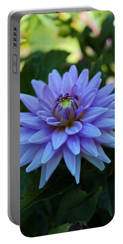 Dahlia Portable Battery Charger featuring the photograph Dream Catcher by Michiale Schneider