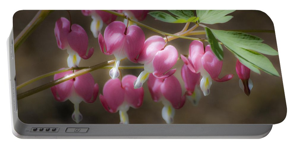 Bleeding Portable Battery Charger featuring the photograph Dreamy Bleeding Hearts by Teresa Mucha