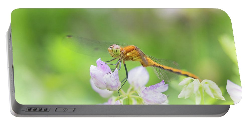 Dragonfly Dragon Fly Bug Insect Flower Macro Closeup Close Up Close-up Outside Nature Natural Outdoors Botany Botanic Botanical Ma Mass Massachusetts Newengland New England Brian Hale Brianhalephoto Portable Battery Charger featuring the photograph Dreamy Dragon by Brian Hale