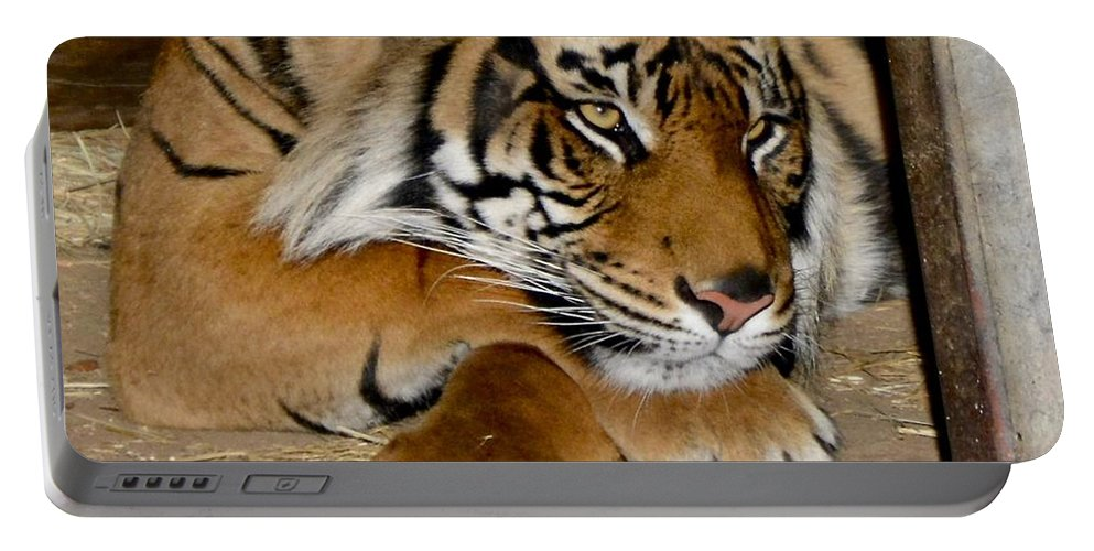 Tiger Portable Battery Charger featuring the photograph Dreamy by Jacqueline Howe