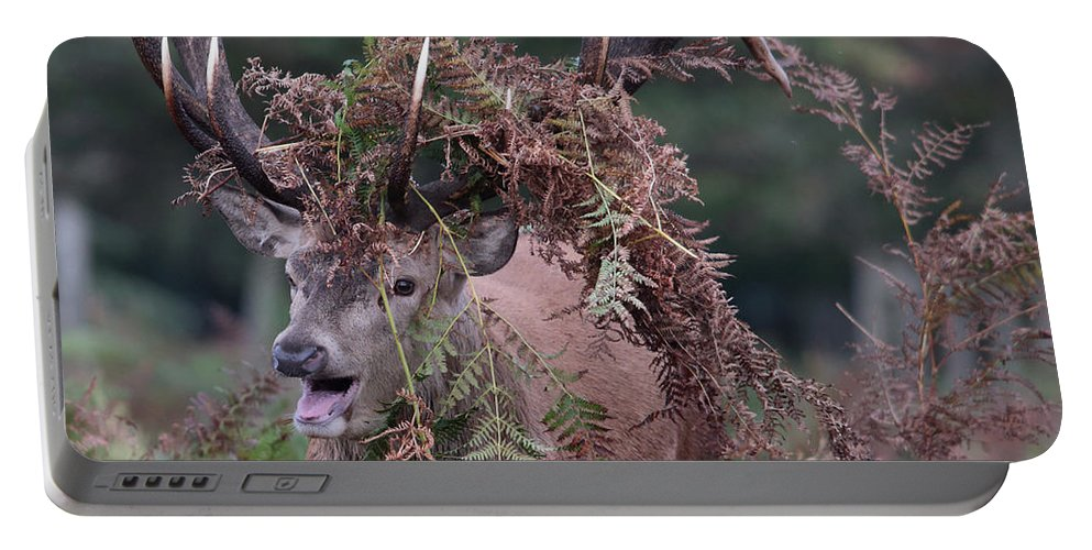 Dressed Portable Battery Charger featuring the photograph Dressed Red Stag by Ceri Jones