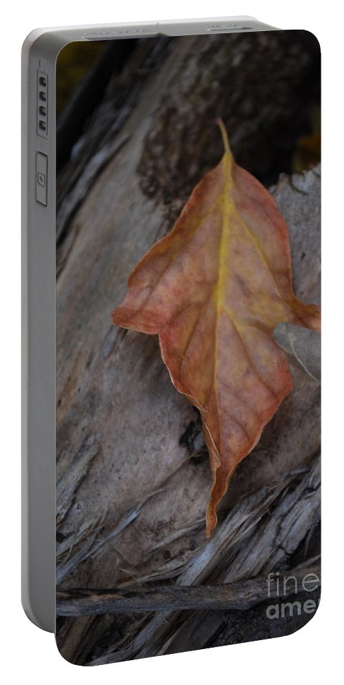 Fall Portable Battery Charger featuring the photograph Dried Leaf On Log by Heather Kirk