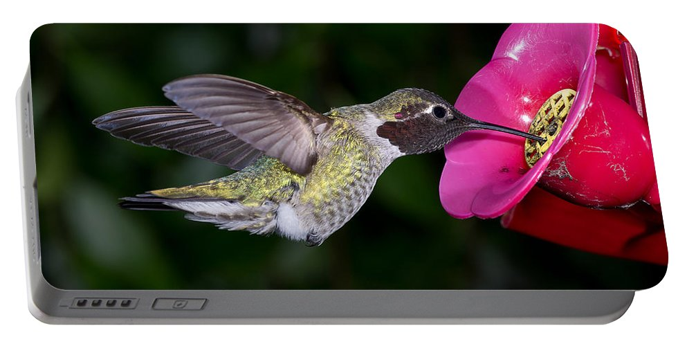 Hummingbird Portable Battery Charger featuring the photograph Drink Deep by Greg Nyquist