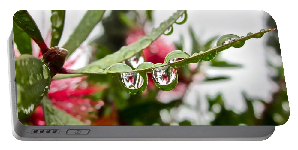 Rain Drop Portable Battery Charger featuring the photograph Drip And Drop by Gwyn Newcombe