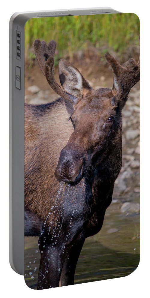 Moose Portable Battery Charger featuring the photograph Dripping by David F Hunter
