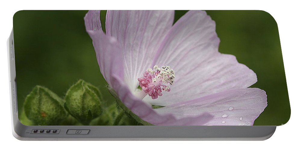 Flower Portable Battery Charger featuring the photograph Drops Of Dew by Deborah Benoit