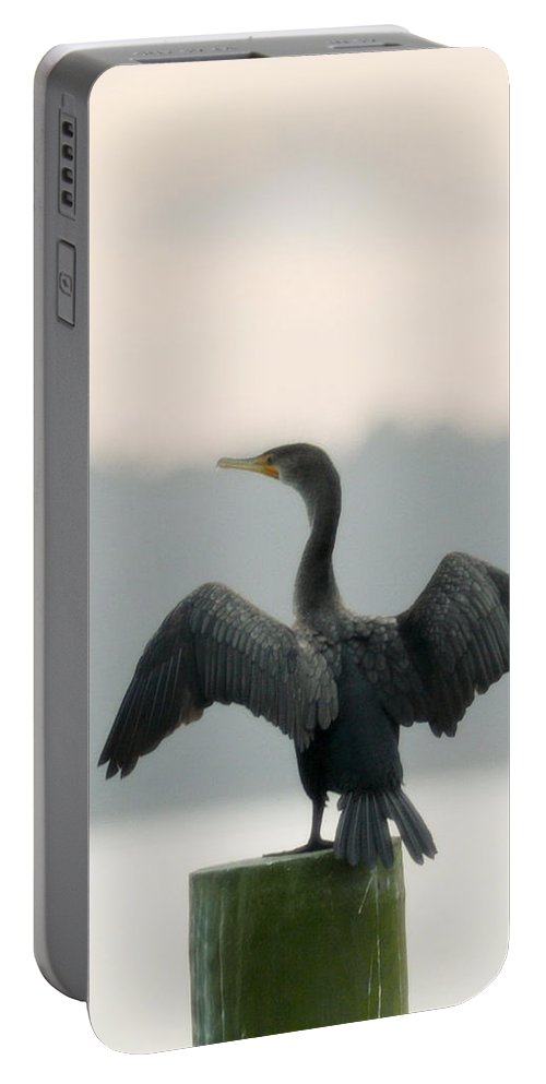 Bird Portable Battery Charger featuring the photograph Drying Out by Phill Doherty