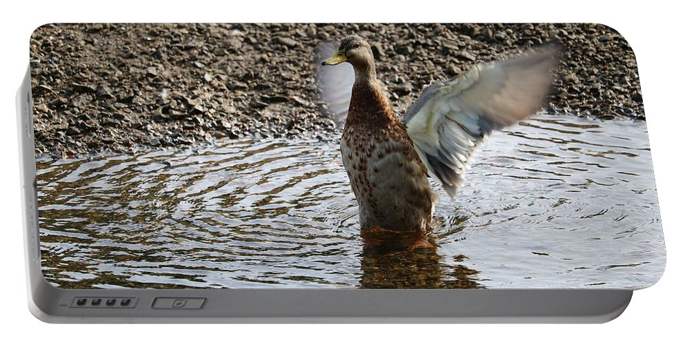 Wings Portable Battery Charger featuring the photograph Duck In A Flap by Michaela Perryman