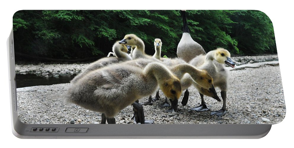 Ducklings Portable Battery Charger featuring the photograph Ducklings by Bill Cannon