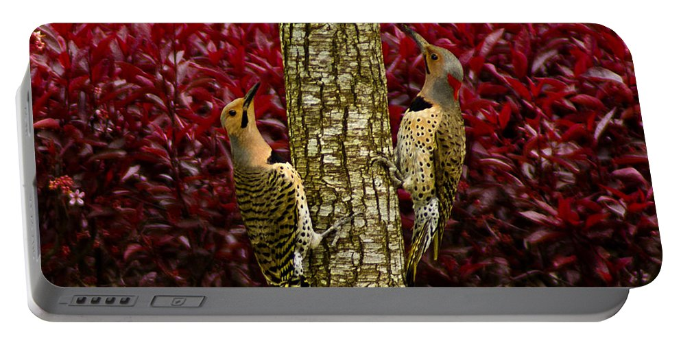 Usa Portable Battery Charger featuring the photograph Dueling Woodpeckers by LeeAnn McLaneGoetz McLaneGoetzStudioLLCcom