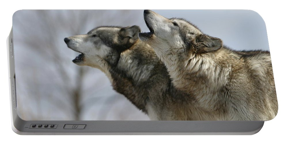 Wolf Canis Lupus Canid Animal Mammal Wildlife Howl Duet Photography Wolfsong Photograph Portable Battery Charger featuring the photograph Duet Howl by Shari Jardina