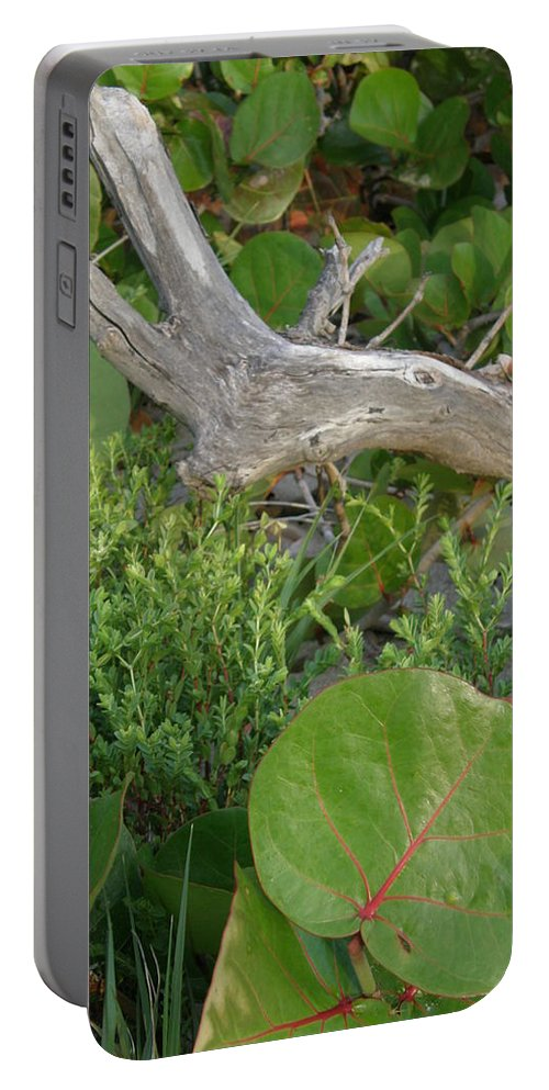 Nature Portable Battery Charger featuring the photograph Dune Plants by Kimberly Mohlenhoff