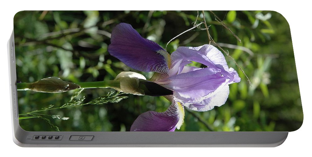 Usa Portable Battery Charger featuring the photograph Dwarf Lake Iris by LeeAnn McLaneGoetz McLaneGoetzStudioLLCcom