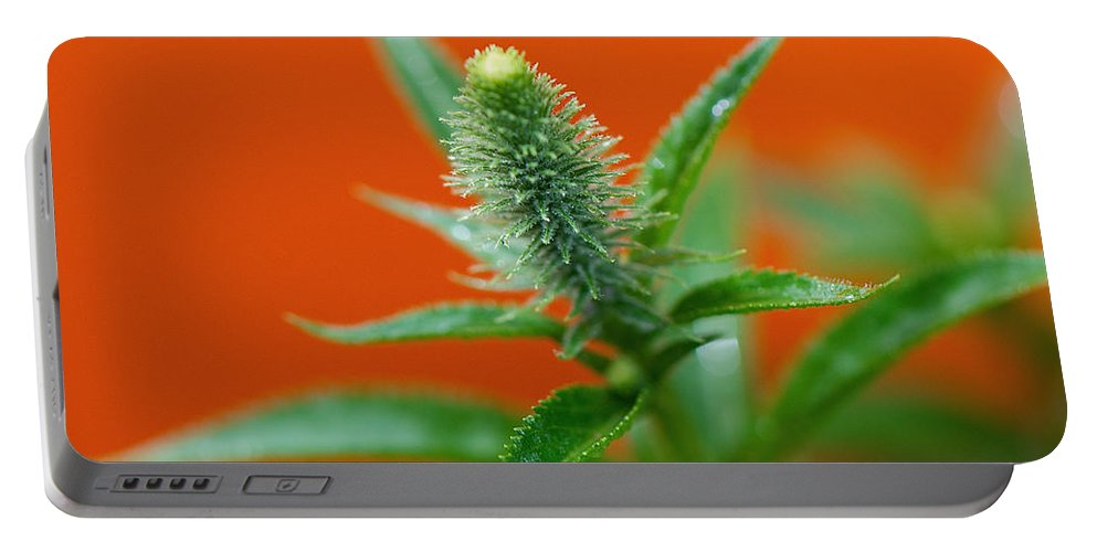 Orange Portable Battery Charger featuring the photograph Eager For Orange by Lisa Knechtel