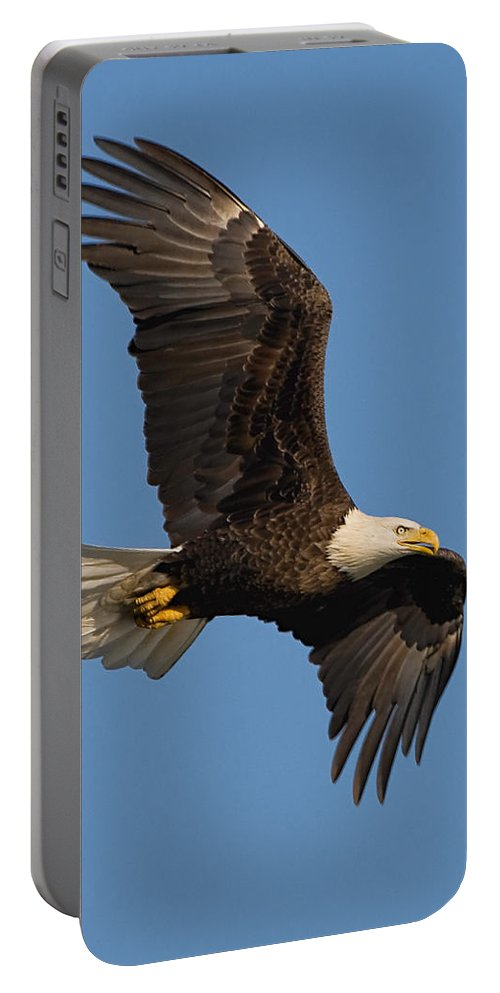 Eagle Portable Battery Charger featuring the photograph Eagle In Sunlight by William Jobes
