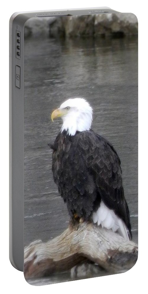 Eagle Portable Battery Charger featuring the photograph Eagle On The River by Elizabeth Mix