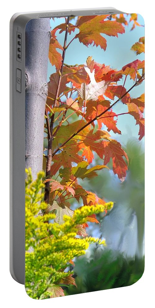 Maple Portable Battery Charger featuring the photograph Early Autumn by Ian MacDonald