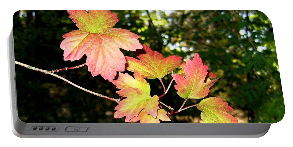 Autumn Portable Battery Charger featuring the photograph Early Days Of Autumn by Will Borden