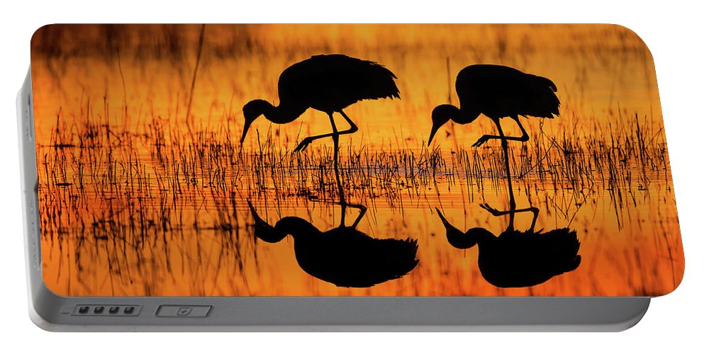 Crane Portable Battery Charger featuring the photograph Early Morning Sandhill Cranes by Christopher Ciccone