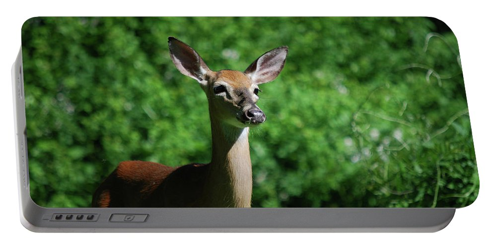 Deer Portable Battery Charger featuring the photograph Ears by Lori Tambakis