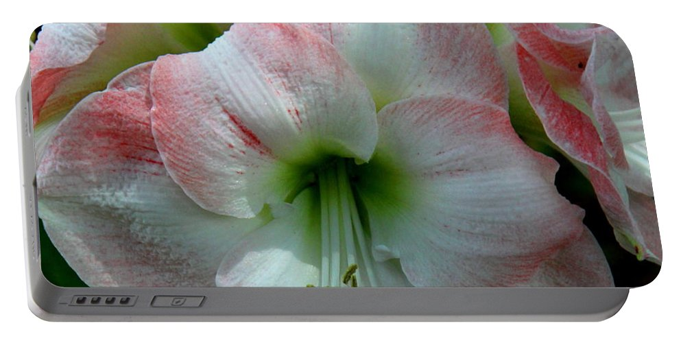 Amaryllis Portable Battery Charger featuring the photograph Easter Amaryllis by Barbara Bowen