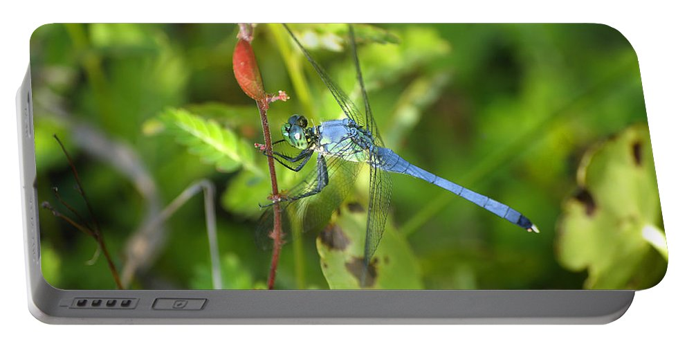 Dragonfly Portable Battery Charger featuring the photograph Eastern Pondhawk Dragonfly by Kenneth Albin