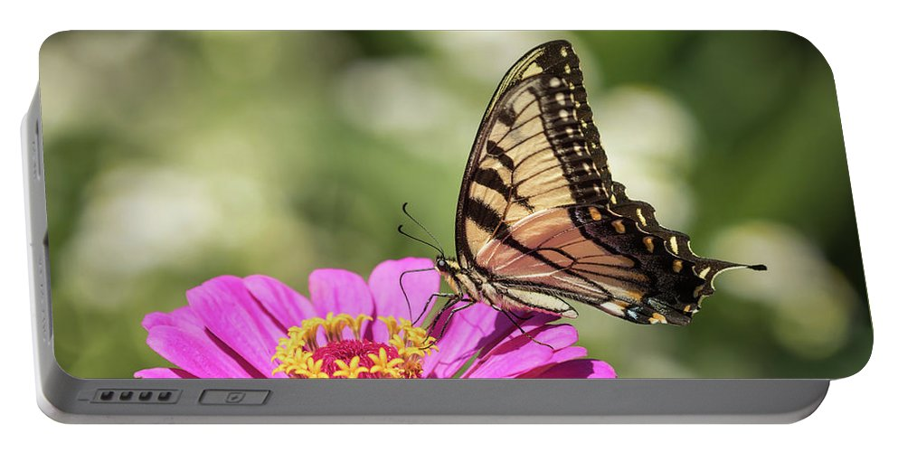 Eastern Tiger Swallowtail Portable Battery Charger featuring the photograph Eastern Tiger Swallowtail 2016-1 by Thomas Young