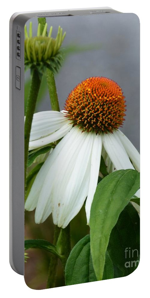 Echinacea 16-03 Portable Battery Charger featuring the photograph Echinacea 16-03 by Maria Urso