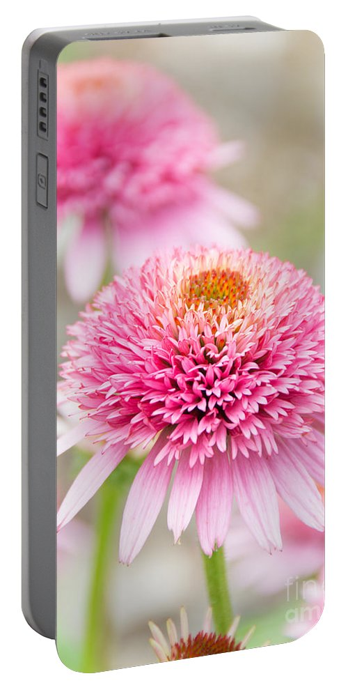 Pom Pom Echinacea Portable Battery Charger featuring the photograph Echinacea Butterfly Kisses by Cheryl Baxter