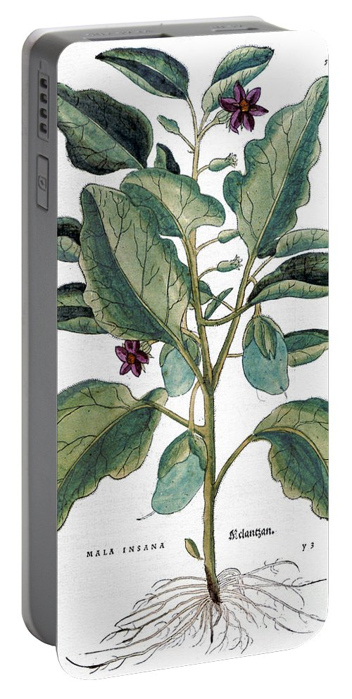 1730s Portable Battery Charger featuring the photograph Eggplant, 1735 by Granger