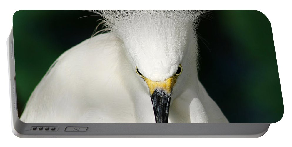 Egret Portable Battery Charger featuring the photograph Egret 2 by Anthony Jones
