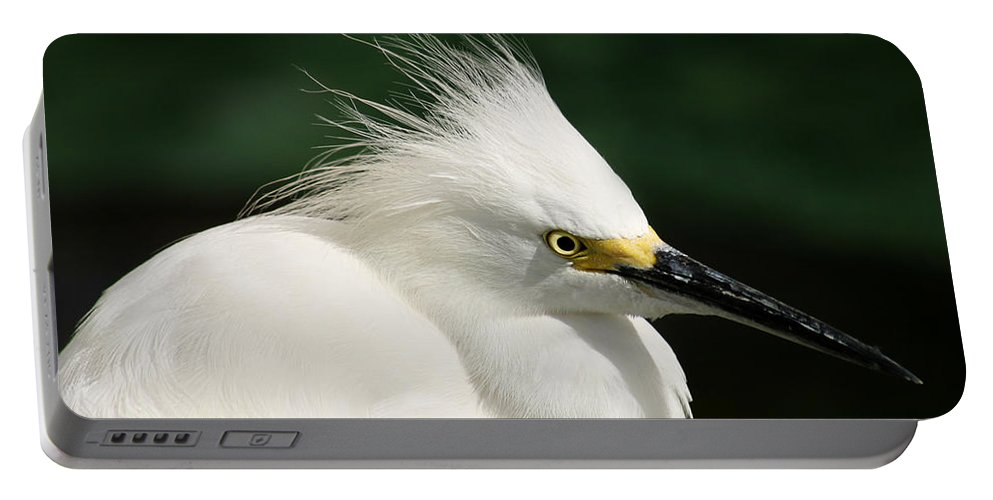 Egret Portable Battery Charger featuring the photograph Egret by Anthony Jones