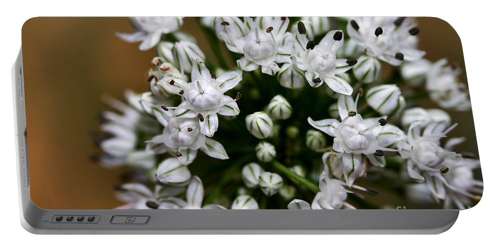 Flower Portable Battery Charger featuring the photograph Egyptian Onion by Louise Heusinkveld