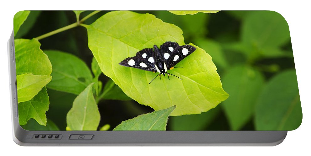 Eight Spotted Forester Portable Battery Charger featuring the photograph Eight Spotted Forester by Christina Rollo