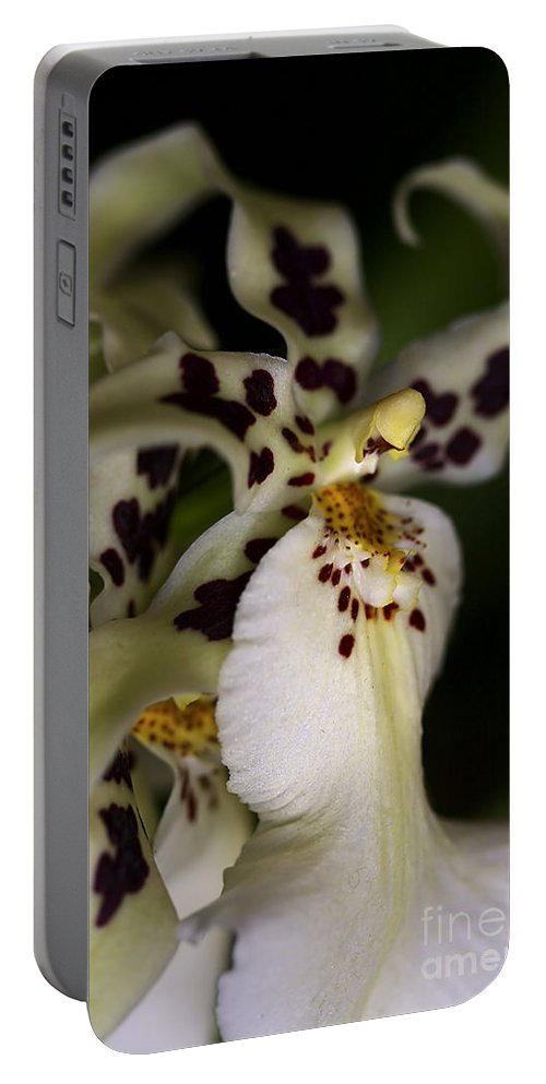 Flower Portable Battery Charger featuring the photograph Elegance by Deborah Benoit