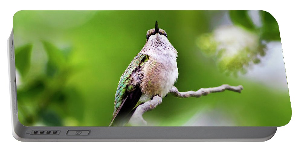 Bird Portable Battery Charger featuring the photograph Elegant Hummingbird by Christina Rollo