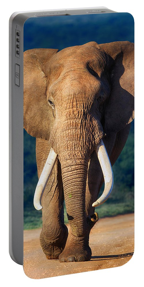 Elephant Portable Battery Charger featuring the photograph Elephant Approaching by Johan Swanepoel