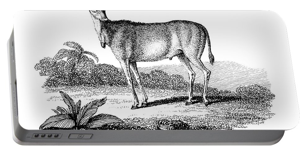1805 Portable Battery Charger featuring the photograph Elk Antelope by Granger