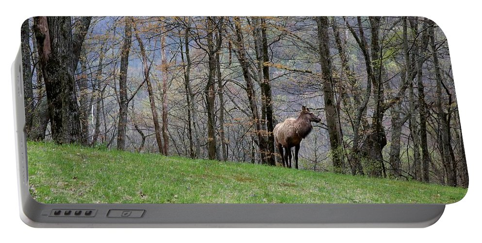 Photographs Portable Battery Charger featuring the photograph Elk, Blue Ridge Mountain by Felix Lai