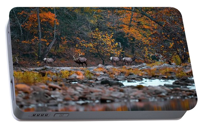 Elk Portable Battery Charger featuring the photograph Elk Crossing by Garett Gabriel