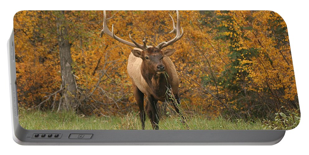 Elk Portable Battery Charger featuring the photograph Elk by Doris Potter