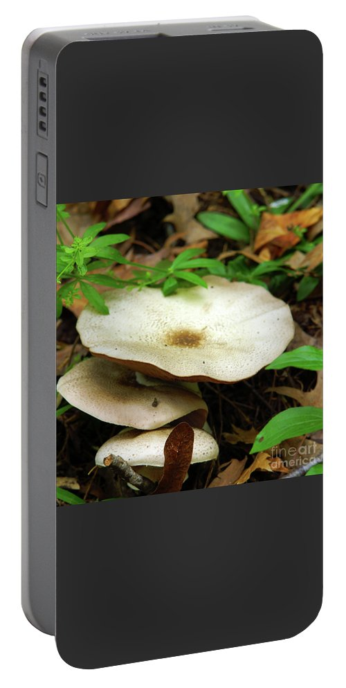 Green Portable Battery Charger featuring the photograph Emerging From The Undergrowth by Robin Clifton