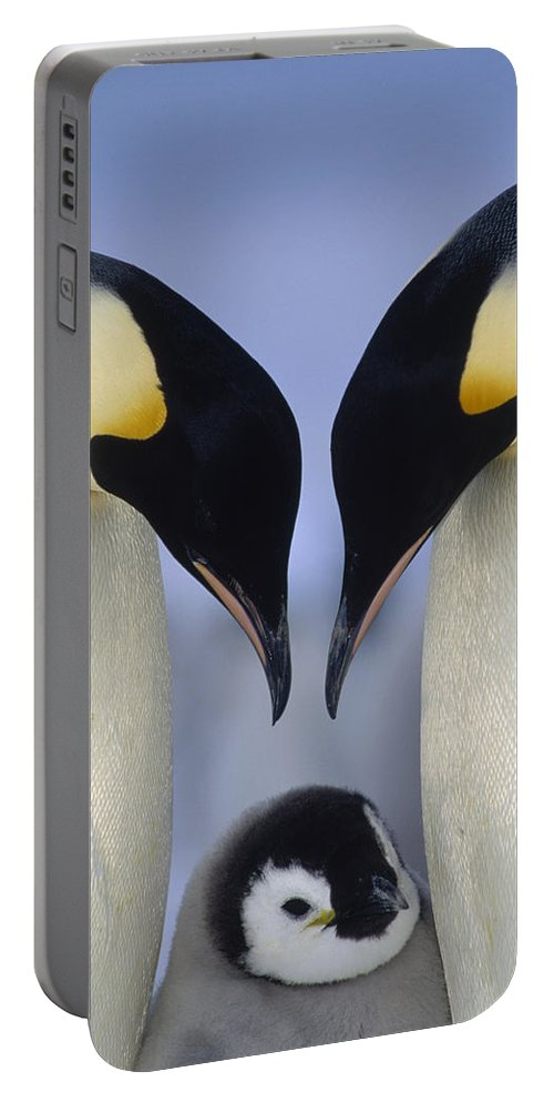 00140140 Portable Battery Charger featuring the photograph Emperor Penguin Family by Tui De Roy