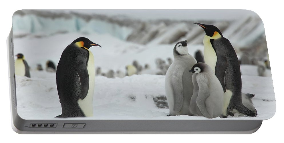 Penguin Portable Battery Charger featuring the photograph Emperor Penguin Landscape by Bruce J Robinson
