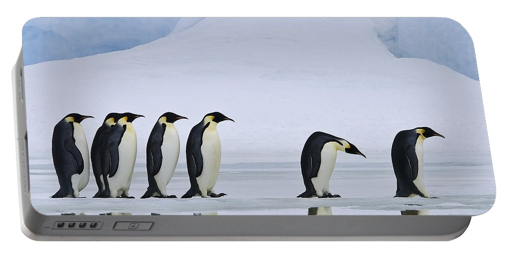 Emperor Penguin Portable Battery Charger featuring the photograph Emperor Penguins by Jean-Louis Klein & Marie-Luce Hubert