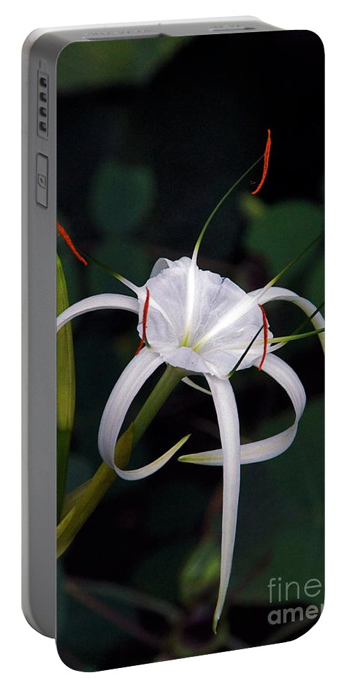 Spider Lily Portable Battery Charger featuring the photograph En Pointe by Byron Varvarigos