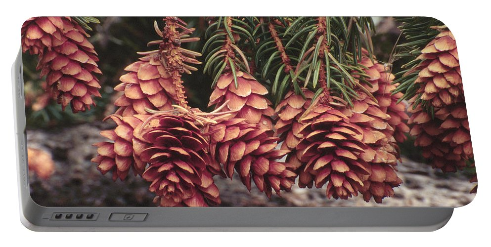 Cones Portable Battery Charger featuring the photograph Engelmann Spruce Cones by Karen Ulvestad