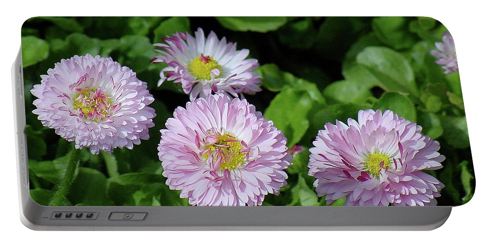 Flower Portable Battery Charger featuring the photograph English Daisies by Shirley Heyn